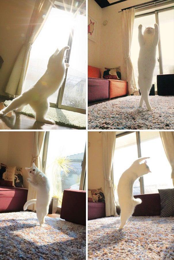 gatos-sol3