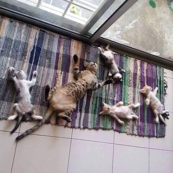 gatos-sol6