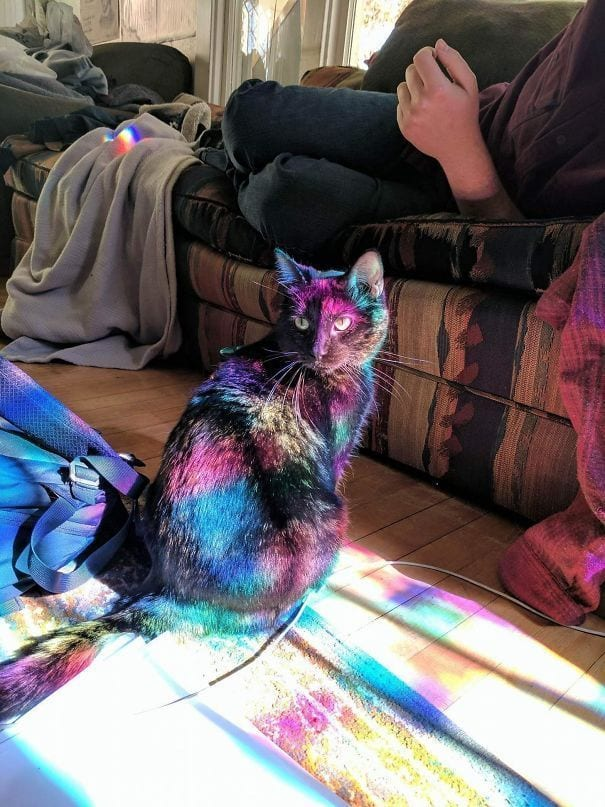 gatos-sol8