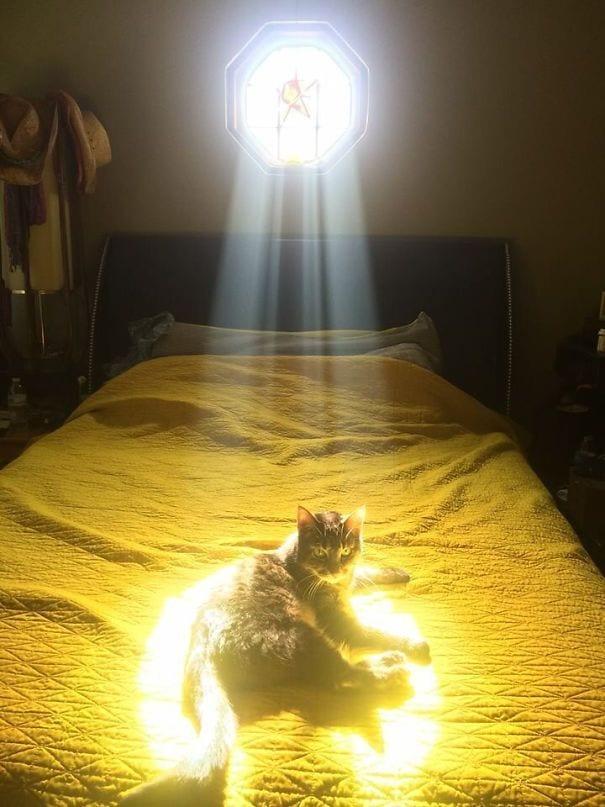 gatos-sol9
