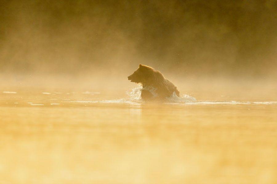 Estados Unidos permite la caza de Osos Grizzly 01