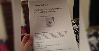 informe gato