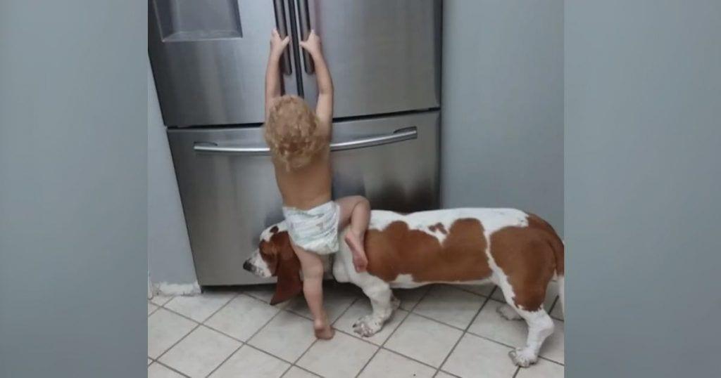 nino ayuda perro