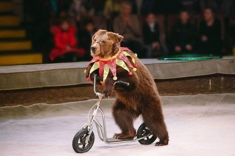 oso-circo