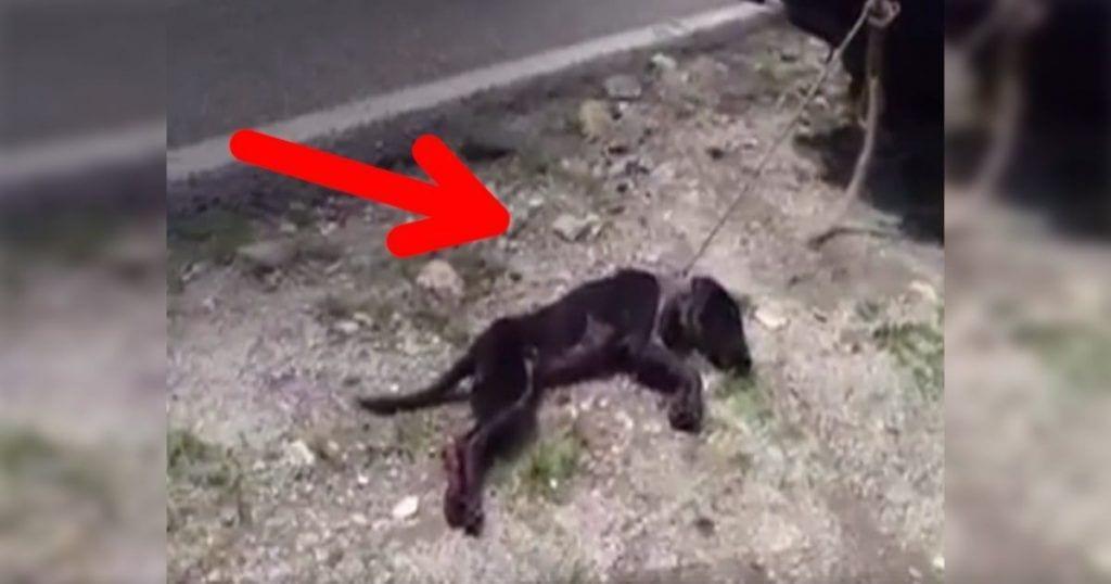 Esta perrita pudo ser rescatada después de haber sido maltratada terriblemente