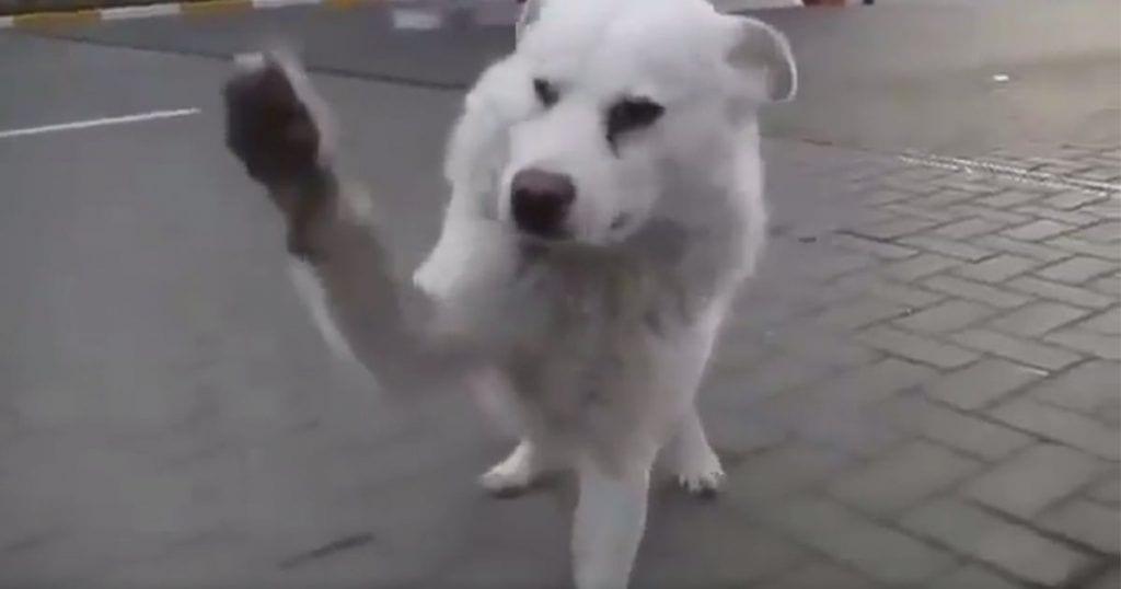 perro-abandonado-reaccion