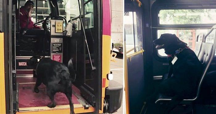 perro-autobus-dest