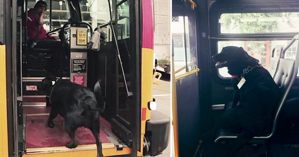 Perro viaja en autobús al parque