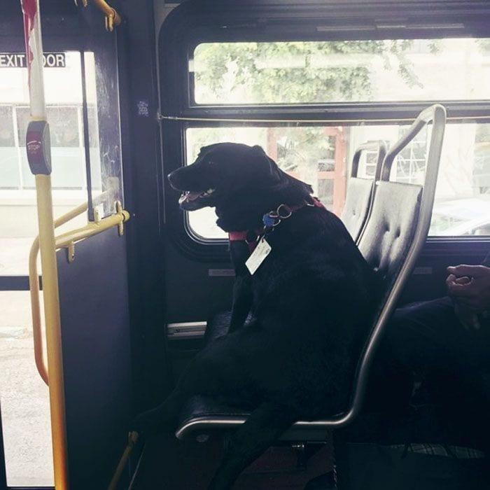 perro-autobus01