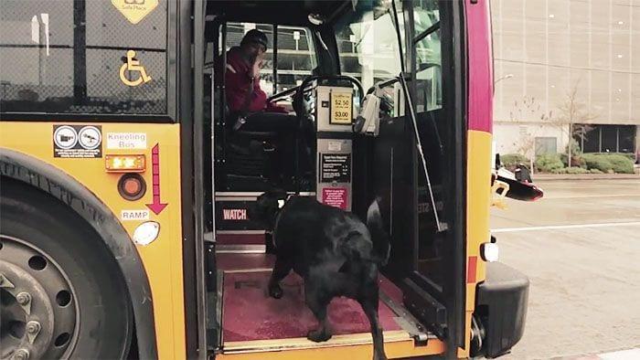 perro-autobus02