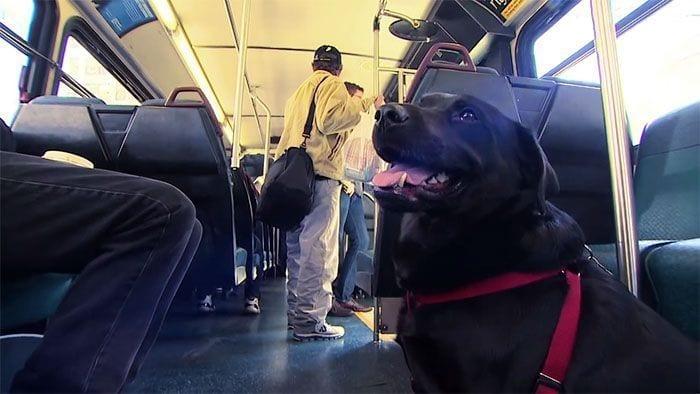 perro-autobus03