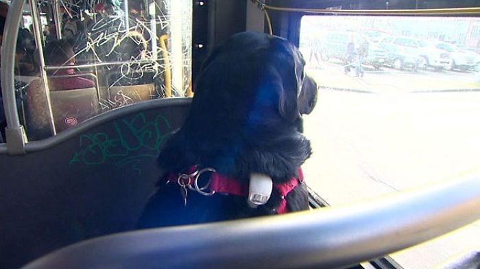 perro-autobus04