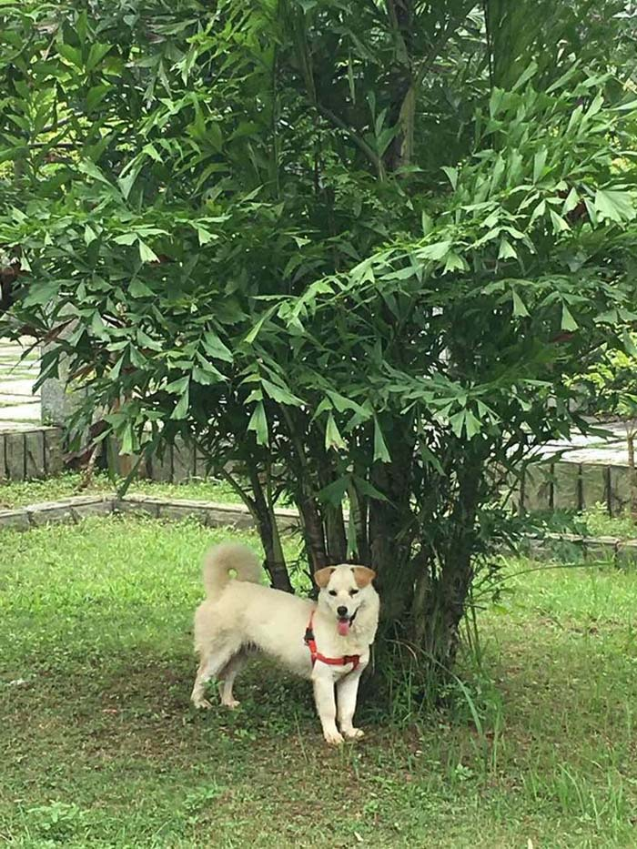 perro-salvado-comida1