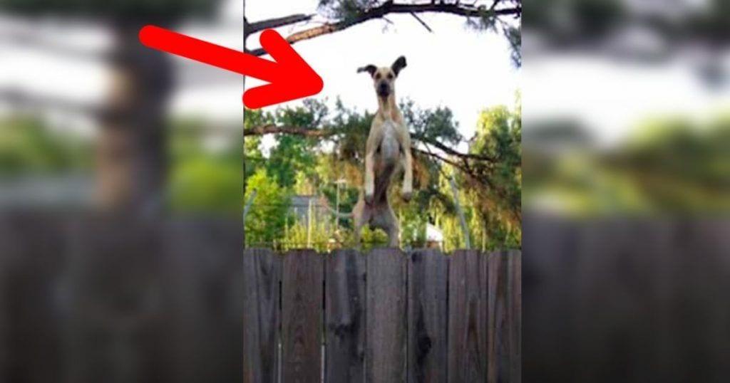 El ingenioso plan de esta perra para espiar a sus vecinos a través del jardín