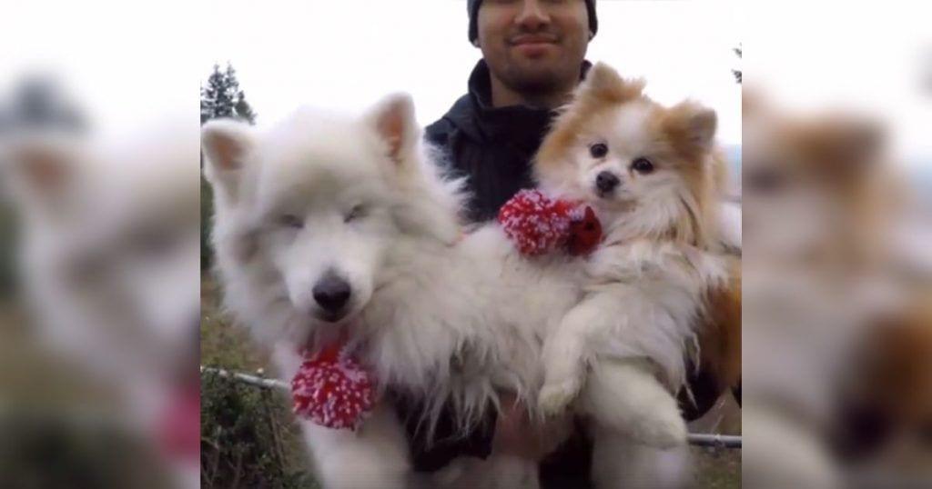 perros-amigos