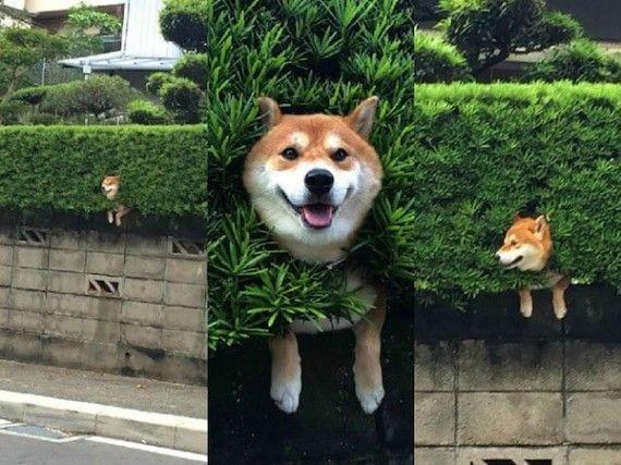 perros-cosas2