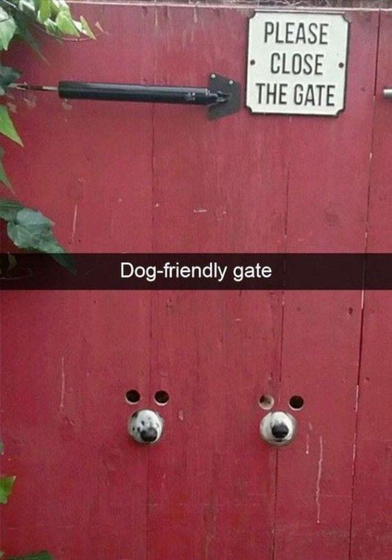 perros-cosas6