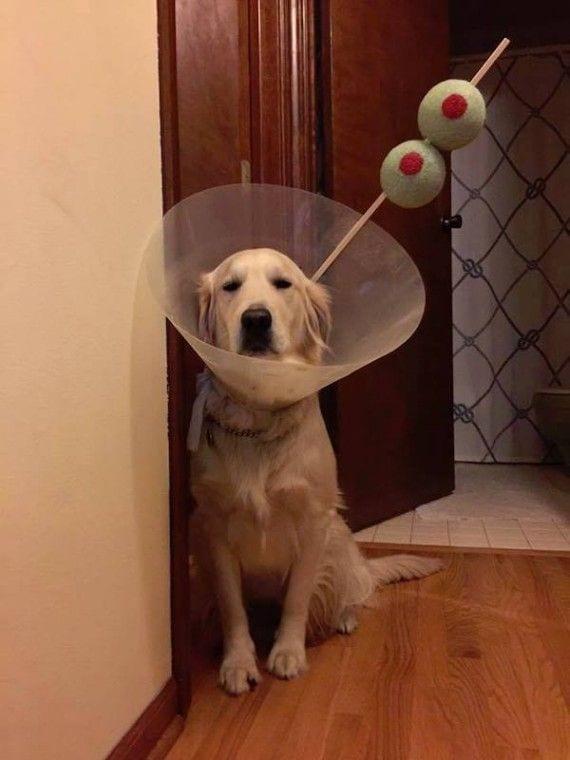 perros-cosas7