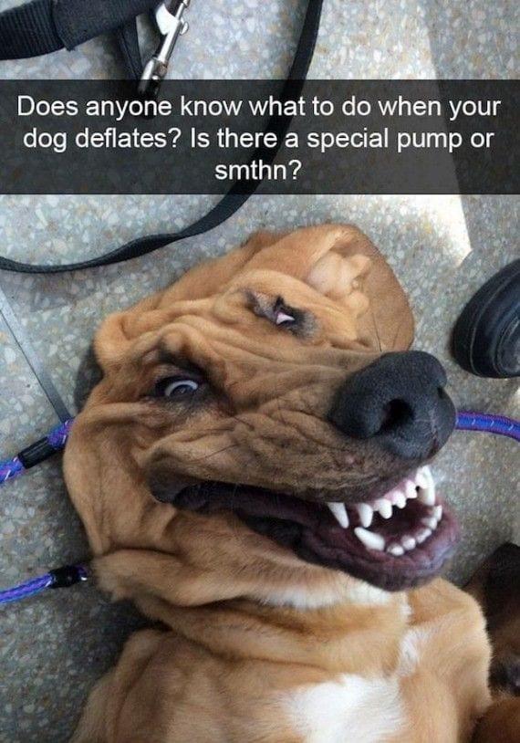 perros-cosas9