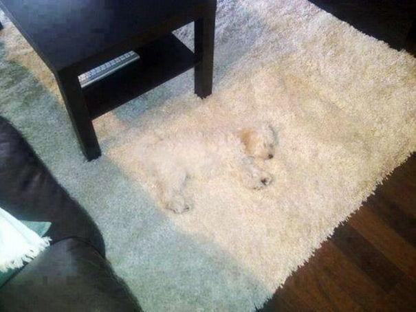 perros-escondite1