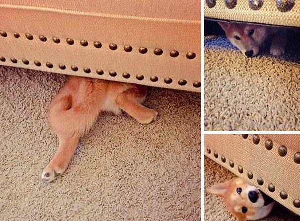 perros-escondite10