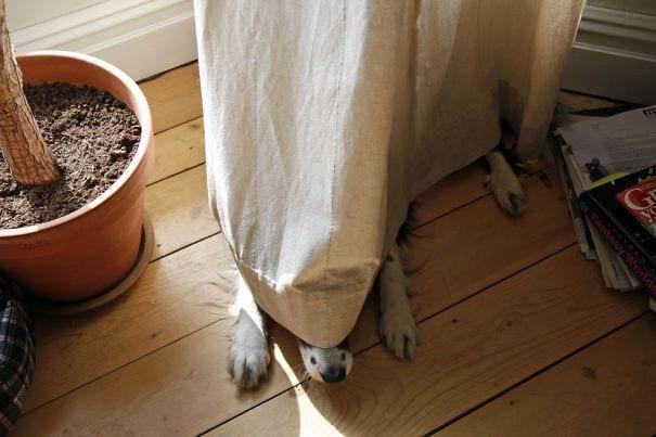perros-escondite15