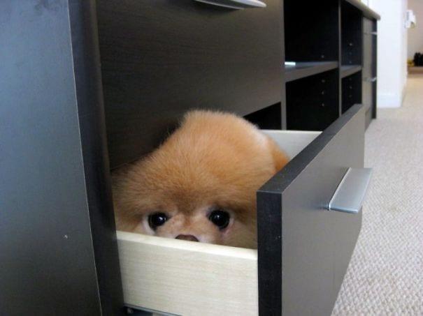 perros-escondite5