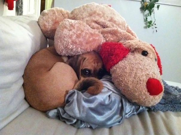 perros-escondite6