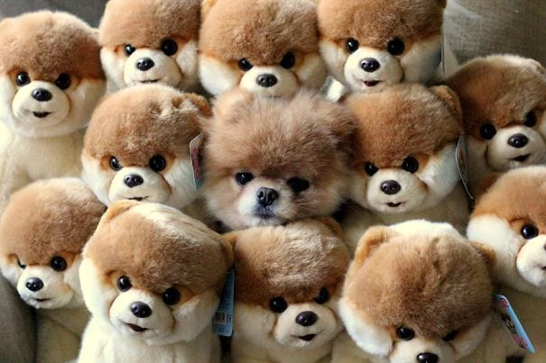 perros-escondite7