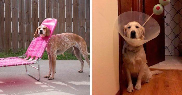 perros momntos 1