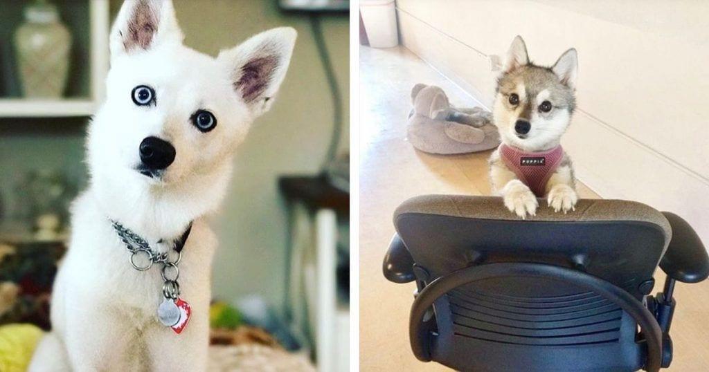perros-nieve