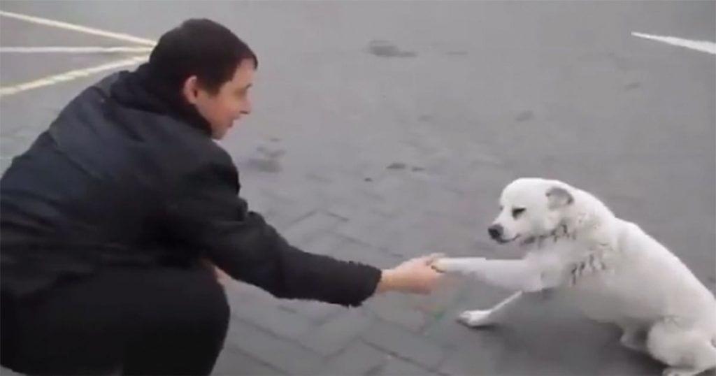 No te imaginas cuál es la reacción de este perro abandonado cuando se le acerca un desconocido