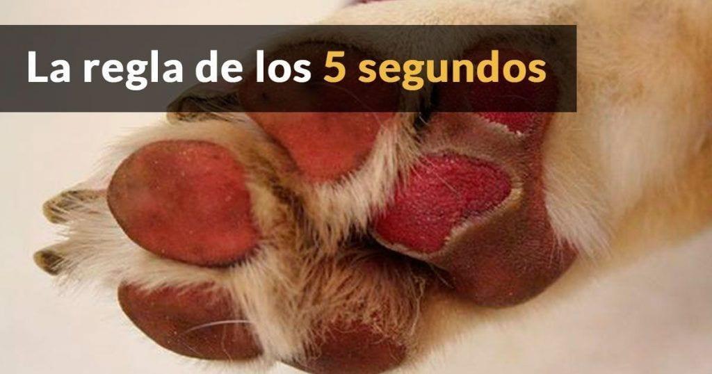 Protege a tu perro del calor del suelo
