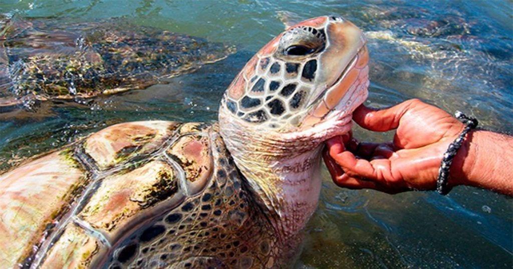 Este centro de conservación para tortugas esconde un terrible secreto
