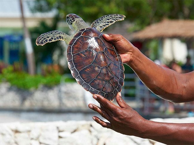 hogar-tortuga-marina-verde-es-granja 01