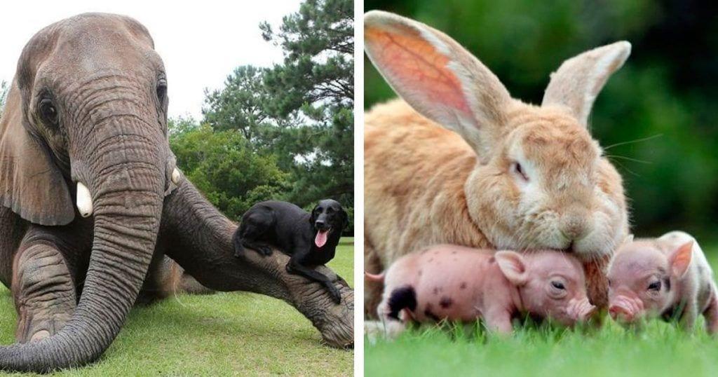 animales diferentes juntos destacada