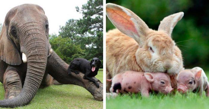 animales-diferentes-juntos-destacada