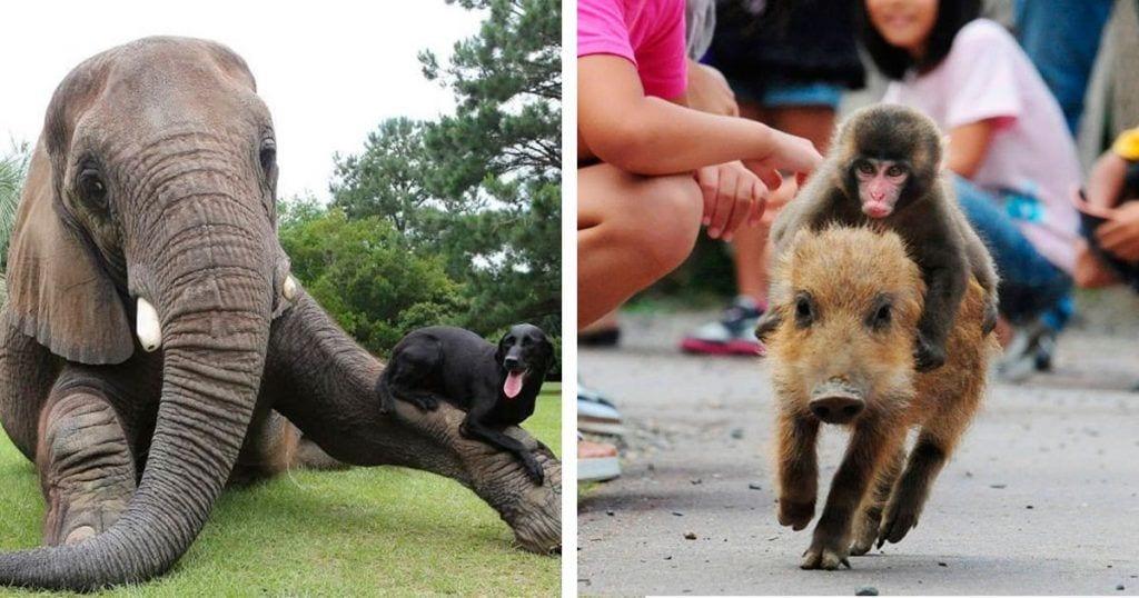 Estos animales adoptaron a otros muy diferentes a ellos para demostrarnos lo maravilloso que es el mundo animal