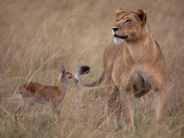 animales-diferentes-juntos1