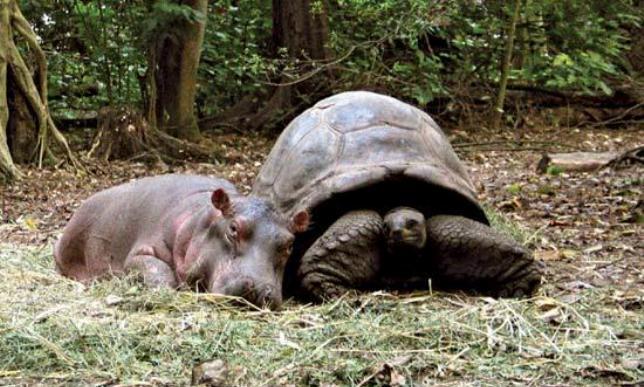 animales-diferentes-juntos10
