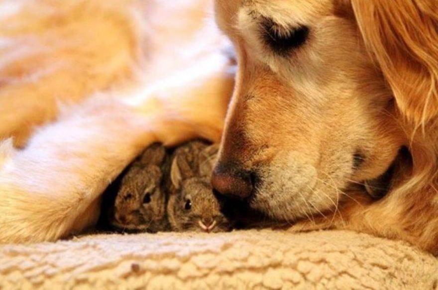 animales-diferentes-juntos14