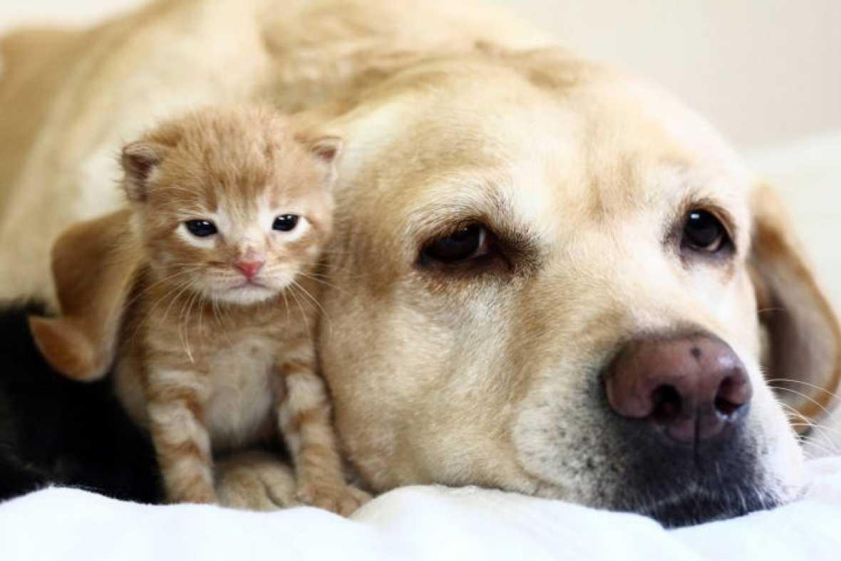 animales-diferentes-juntos2