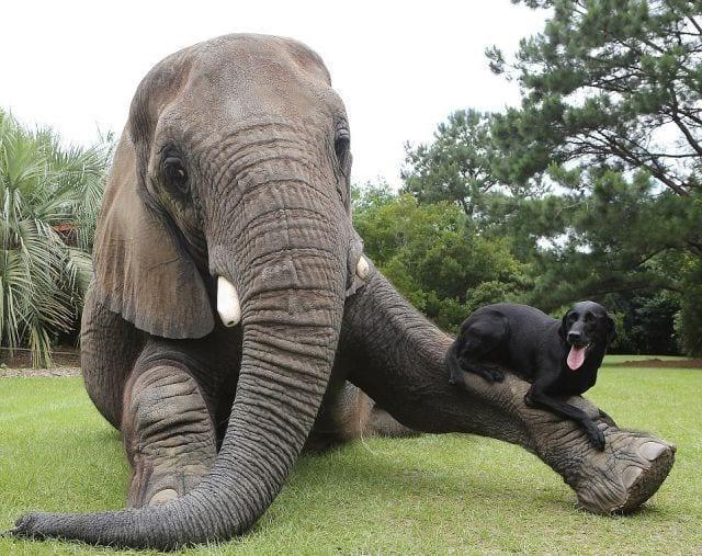 animales-diferentes-juntos3
