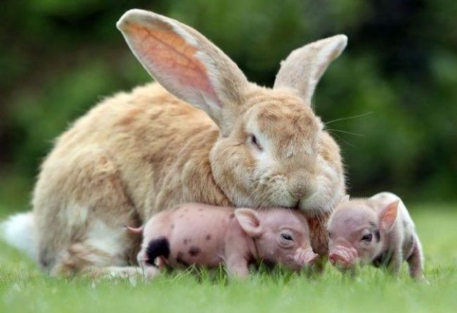 animales-diferentes-juntos4