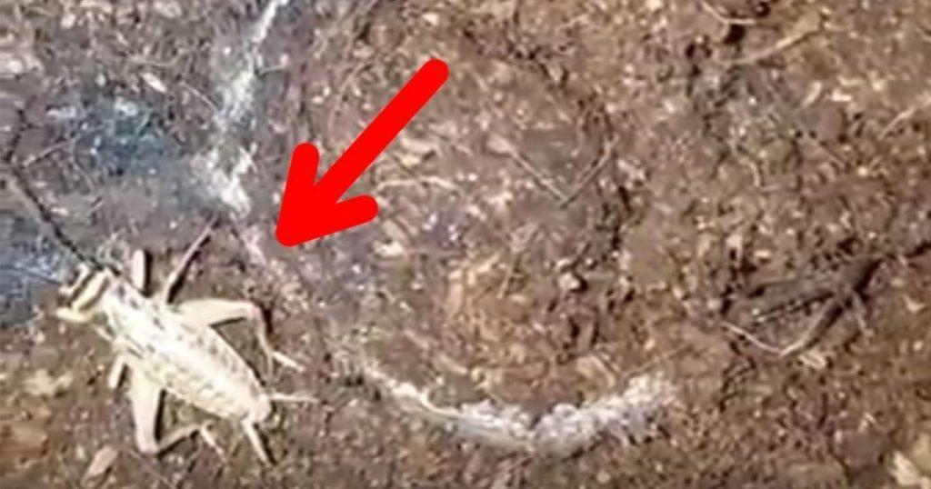 Una araña aparece del suelo y caza otro insecto
