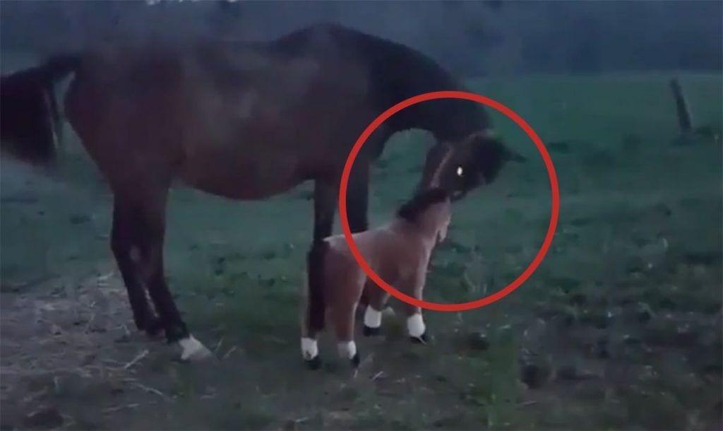 caballo falso