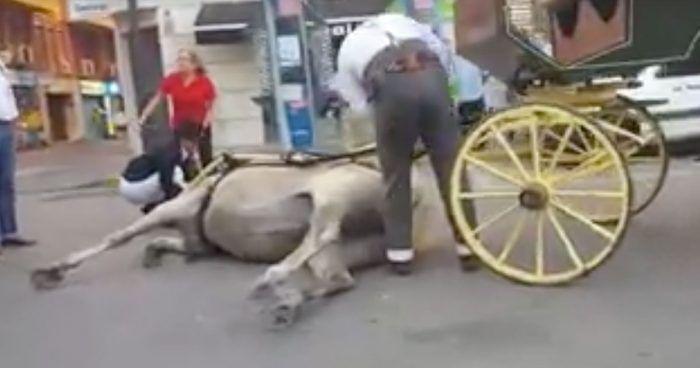caballo.desplomado linea dest