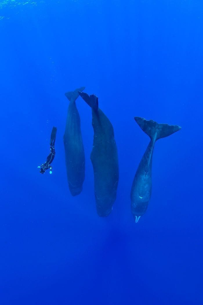 cachalotes-durmiendo-04