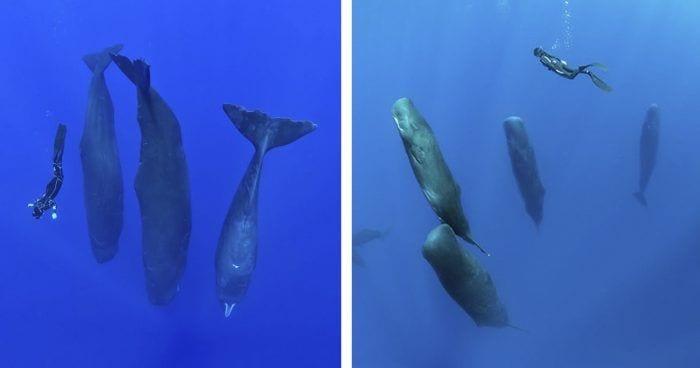 cachalotes durmiendo destacada
