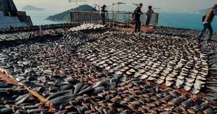 comercio aleta tiburon